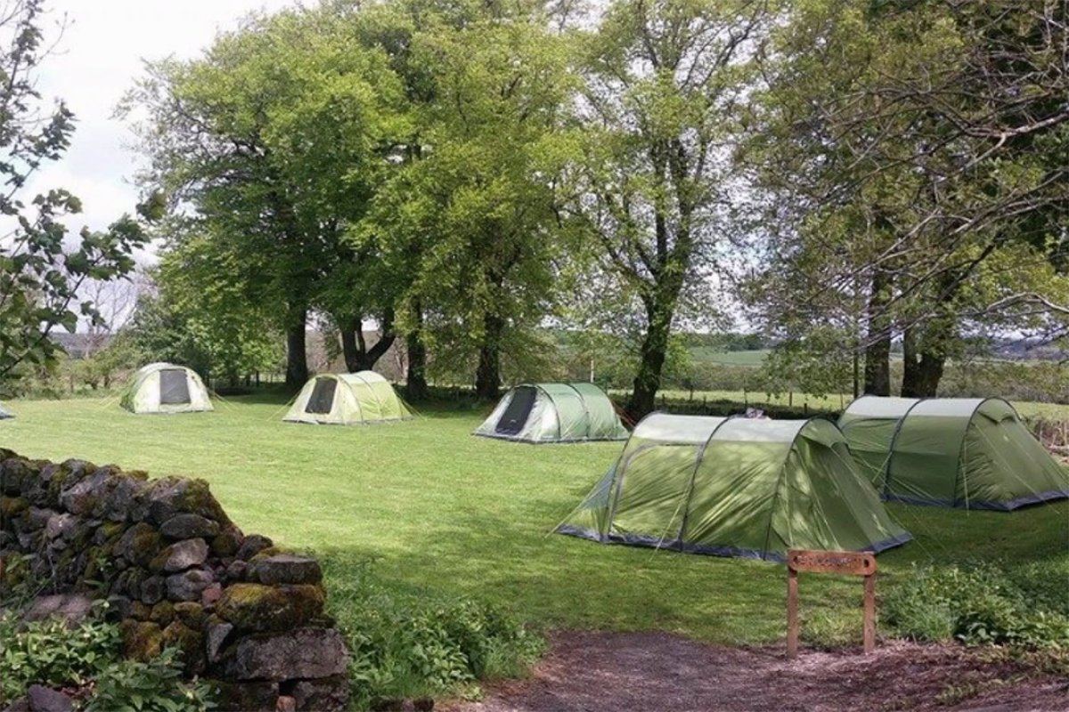 Field with green four tents