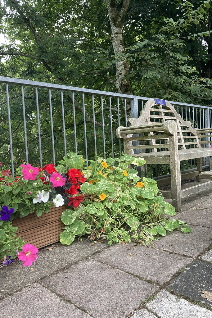 A memorial bench with a planter of flowers